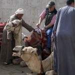 Cruising the Nile: On the Orneryness of Camels and Other Considerations