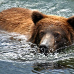 North to Alaska: The Beauty and the Beast