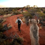 Ships of Uluru: And Uncommon Way to Tour the Australian Outback