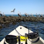 Four Reasons Why Kayak Fishing is Growing So Fast on the Sea of Cortez