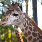 All in a Day's Visit to the San Diego Zoo