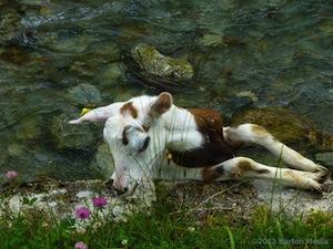 nosy_goat_parco_devero