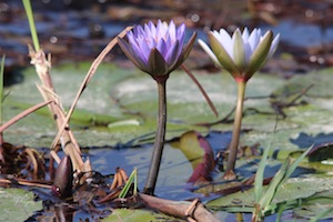 epic_houseboat_flower