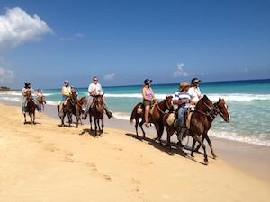 macao_horses