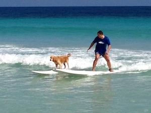 maco_surf_dog