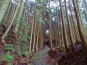 kumano_kodo_path_600