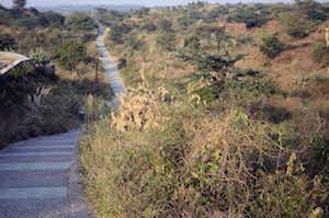 aravali_path