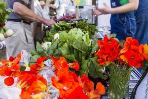 fresh_veggies_at_market