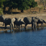 Chobe National Park — The Ageless Traveler