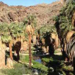 Indian Canyons Tribal Park – The Coolest Place in a Hot Town