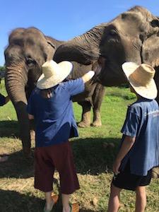 mahout_elephant_care