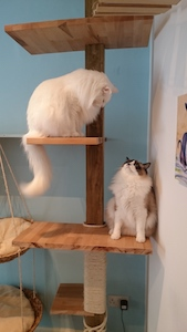 maison_de_moggy_cat_tree