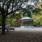 A Perfect Autumn Sunday in Montreal's Rosemont Neighborhood