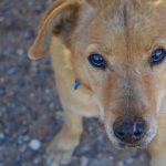 Destination: Best Friends Animal Sanctuary, Kanab, Utah