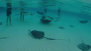 swimming_with_stingrays