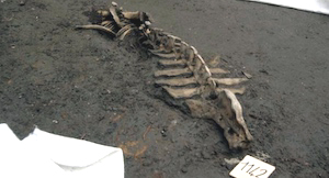 Crocodile Remains COURTESTY OF NEOPOLITAN ITALY