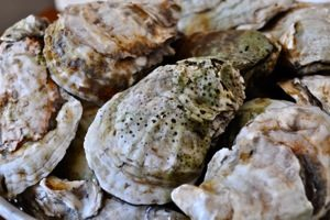 Elm Street Oyster House Selection_Greenwich CT_ BY KDEVLIN