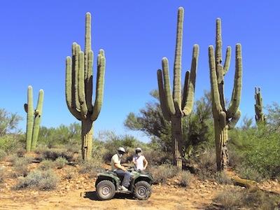 Mighty saguaro cacti