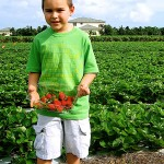 Farm Fresh Fruits and Spices – A Day of Pick-Your-Own Just an Hour Outside of Miami