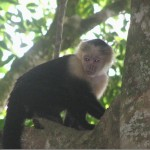 Going Wild in Costa Rica