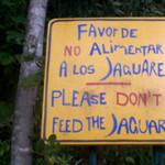 Hidden in the Jaguar Jungle – Mexico
