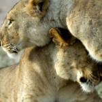 Wildlife and Luxury: On Safari in Tanzania