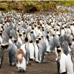 Macquarie Island — Destination of the Lucky Few