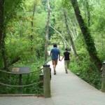 A Roosevelt Island Adventure
