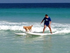 maco_surf_dog