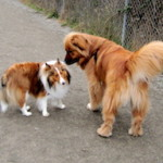 Off the Grid in Seattle: Visit an Off-leash Dog Park