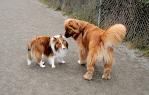 seattle_dog_park