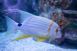 public_aquariums