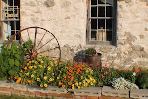flowers_and_wheel