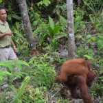 A Borneo Trek and Kayak Adventure: Rainforest, Orangutans, Mountain Village Longhouses, and Kayaking on the Sarawak River