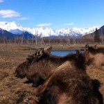 Top 5 Must Do's in Anchorage, Alaska