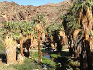 palm_canyon_first_view