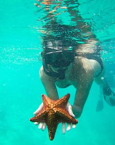 san_blas_starfish