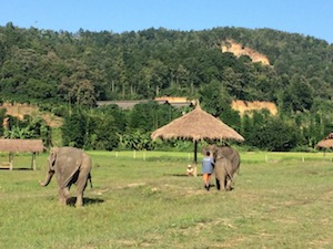 lanna_kingdom_elephant_sanctuary