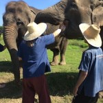 Chiang Mai's Intimate Elephant Refuge