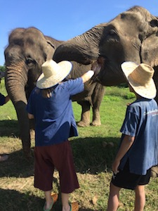 mahout_elephant_care