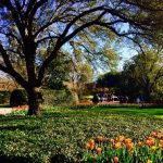Take a Day Trip to the Dallas Arboretum and Botanical Garden!