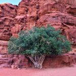 Petra and Wadi Rum: Travel Tips from an Intrepid Traveler