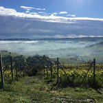 Barolo—A Hidden Wine Town in Northern Italy