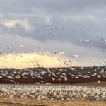 A Drive on the Wild Side: New Mexico's Bosque del Apache