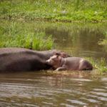 River Nile Boat Tour to Murchison Falls in Uganda, Africa